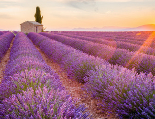 What are the Health Benefits of Lavender Essential Oil?